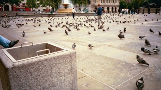 The Bad Old Days - Pigeons!