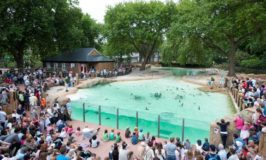 Ten Interesting Facts and Figures about ZSL London Zoo