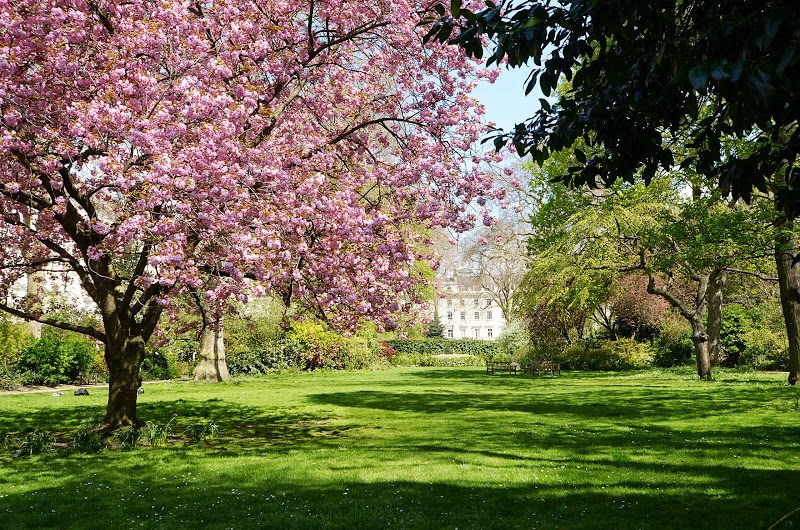 Event Alert: Explore London's Private Gardens and Squares during Open Garden Squares Weekend