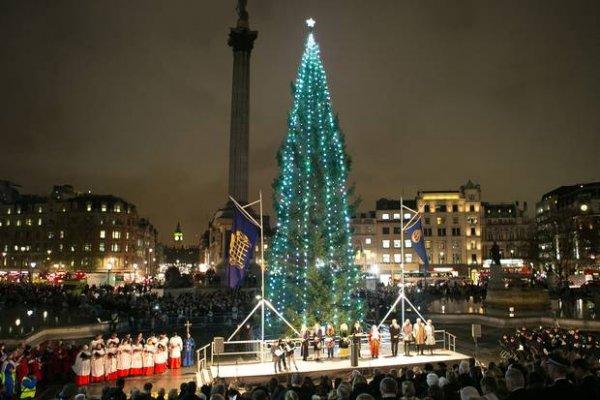 Christmas in London: 2014 Trafalgar Square Christmas Tree Lit Last Night