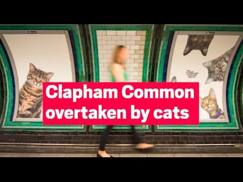 Londonism: Clapham Common Tube Station Overtaken by Cats