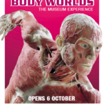 New Museum Alert: Body Worlds Coming to London as a Permanent Museum
