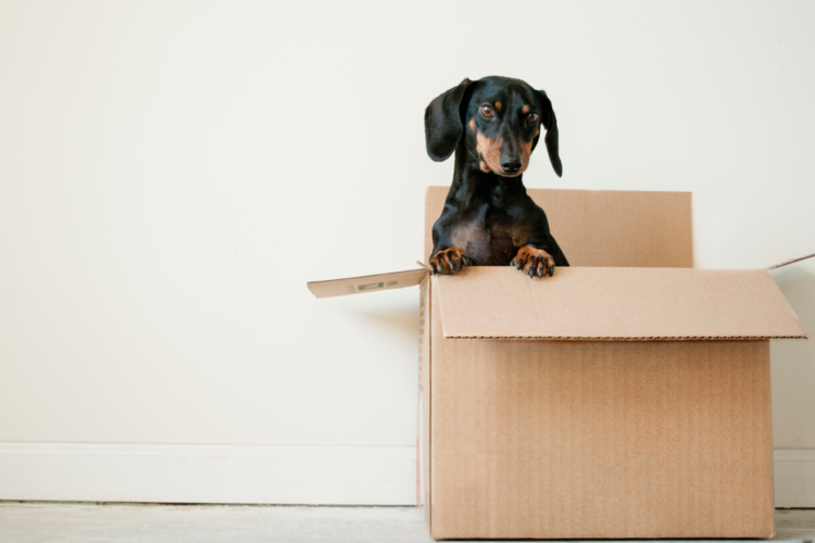 HOW TO CHOOSE THE RIGHT PET FOR LONDON LIFE