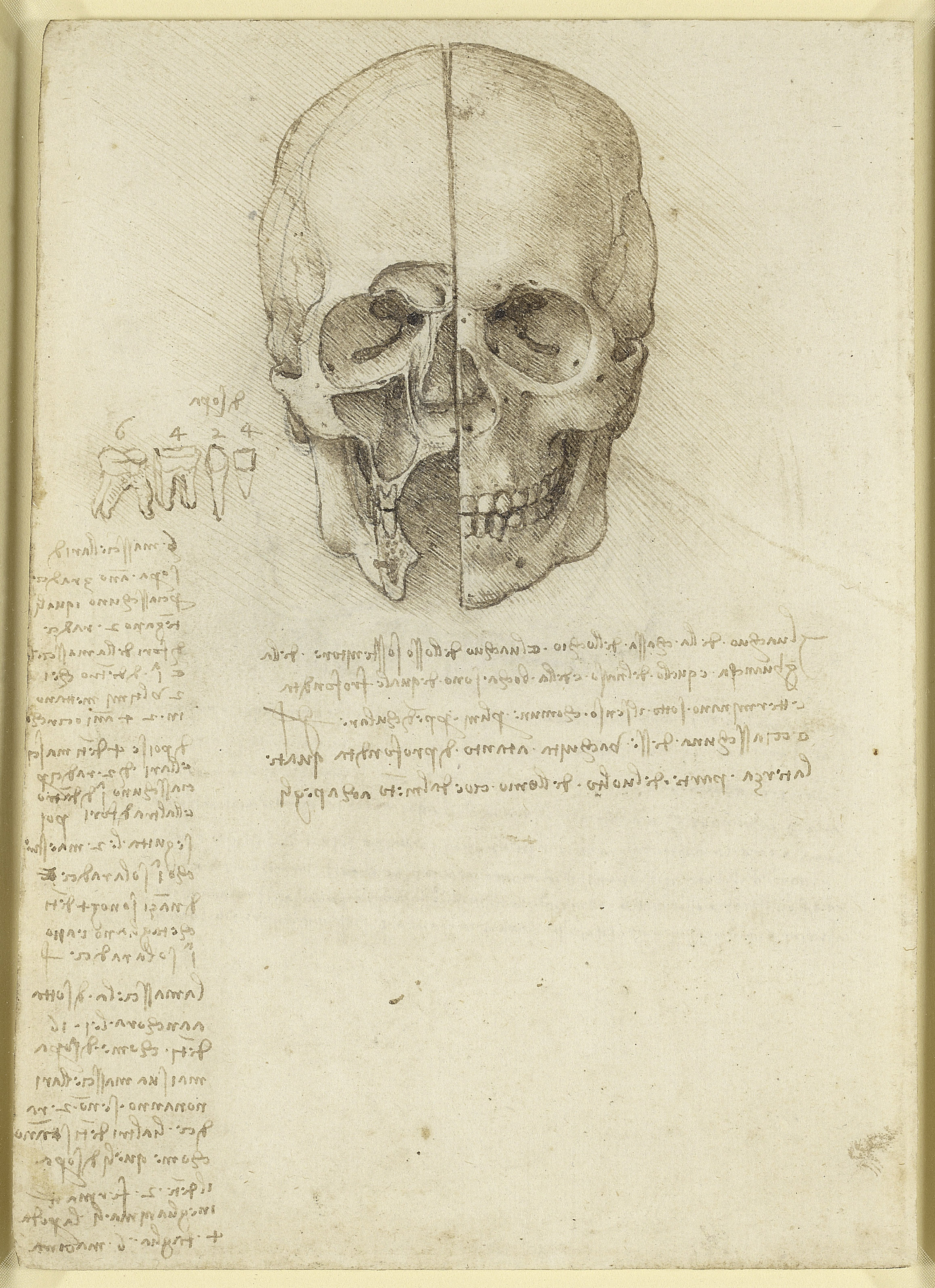 Leonardo da Vinci, The skull sectioned, 1489