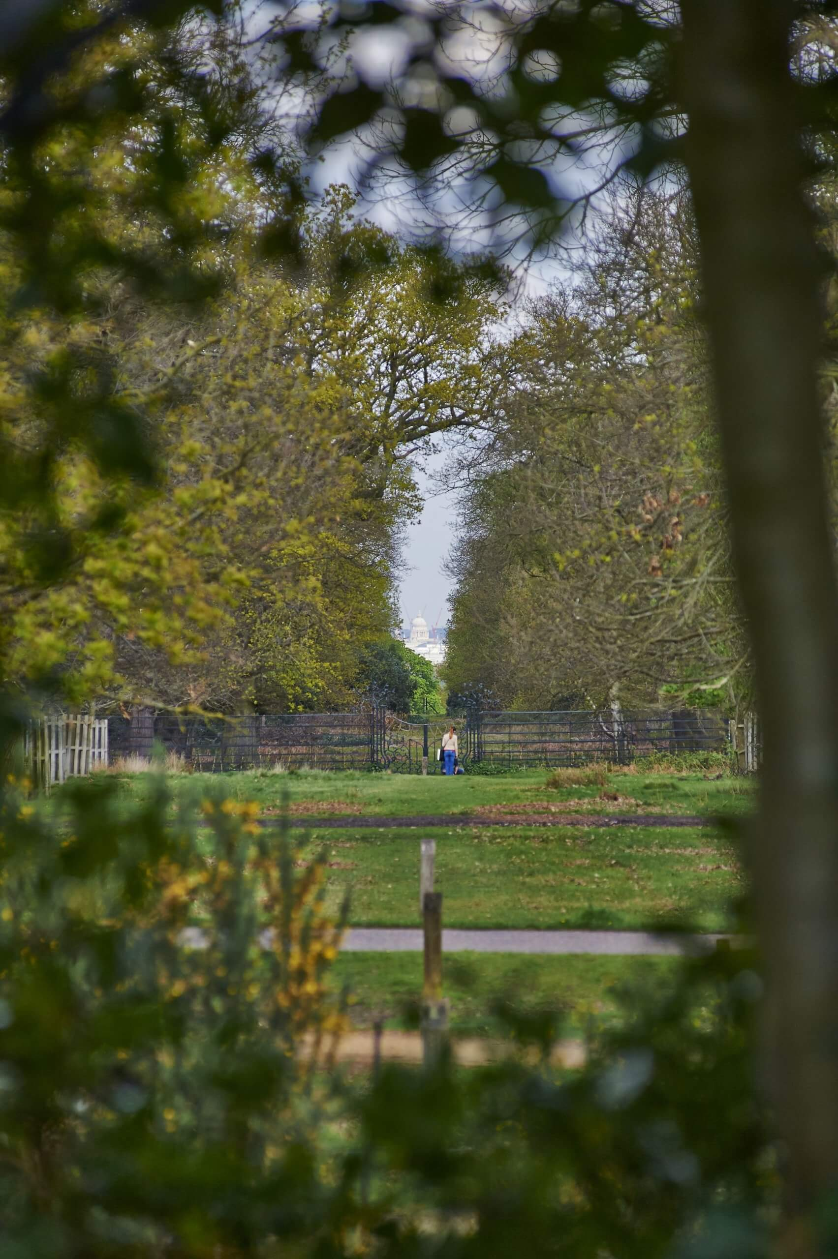 View of St Paul's Cathedral from King Henry's Mound, Richmond Park.
