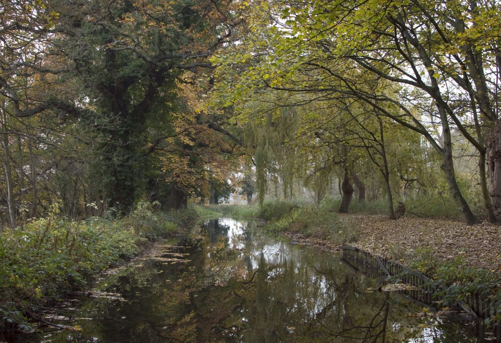 Autumn in the Woodland Gardens, Bushy Park.